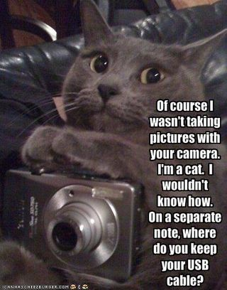 Funny-pictures-cat-denies-taking-photos