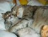 Kitties_1