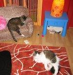 Meow_mix_kitties